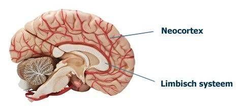 bekijk de why van the golden circle anders simon sinek neocortex limbisch systeem