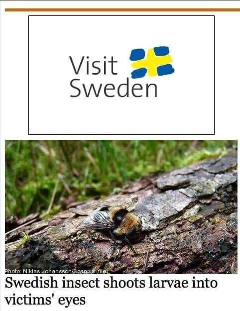 Bezoek zweden want insect schiet larf in oog